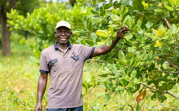Dabir, a cashew farmer and part of Tree Aid's cashew enterprise project, smiling as he stands proudly with a cashew tree on his land.