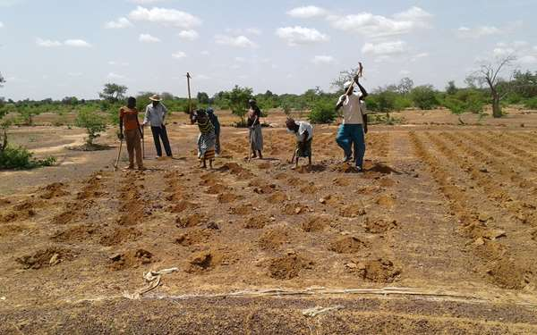 Community members digging zai pits in the land - these help to conserve water and nutrients in the soil.