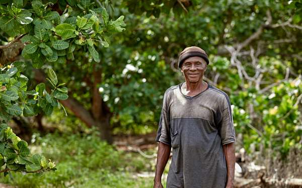 Philemon, a man working with Tree Aid to grow cashew enterprises, standing in front of cashew tree in Ghana.