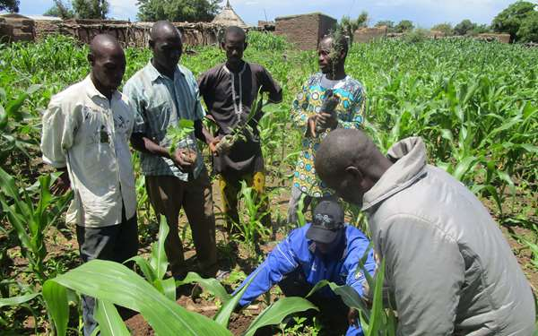 Community members on the restoring Koulikoro project learning to restore their land.