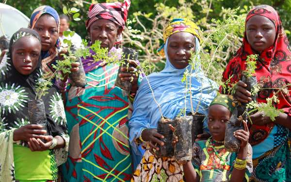 Women in Niger holding tree saplings.