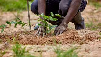 Kafera Danunase planting a tree sapling in the soil on Tree Aid's Grow Hope Project in Ghana