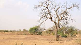 An arid landscape in Burkina Faso that has been degraded by deforestation.