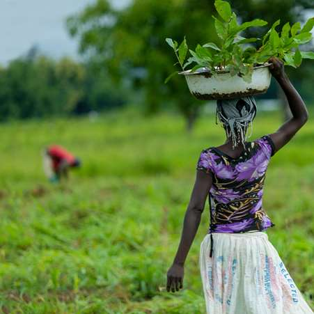 A woman in northern Ghana walking away with a bowl of tree saplings on her head, ready to plant them in her community.
