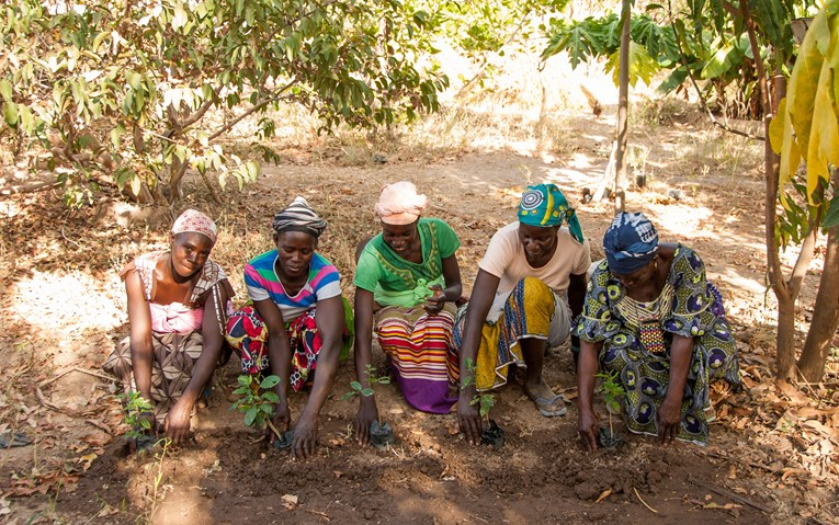Women that have been supported by Tree Aid to grow trees and sustainable businesses.