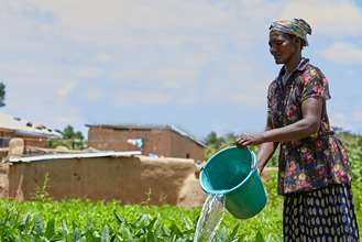 A woman in northern Ghana watering her crops.