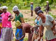Women in northern Ghana holding hands and smiling in celebration after they finished planting trees in their community.